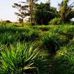 sustainable lentera farm